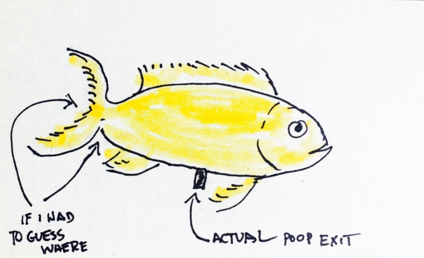 fish-pooping-sketch